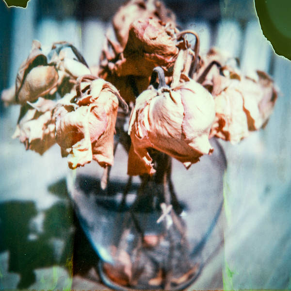 polaroid-glass-flowers015.jpg