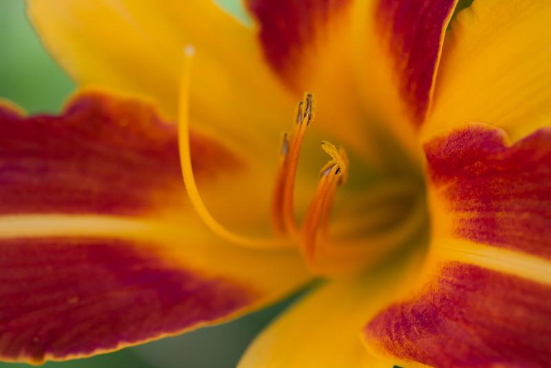 Winnipeg Photographers (Flowers)