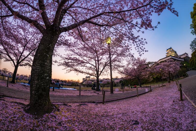 fisheye-dusk-himeji-castle-hanami-blossom-night-lighting-japan-bricker.jpg