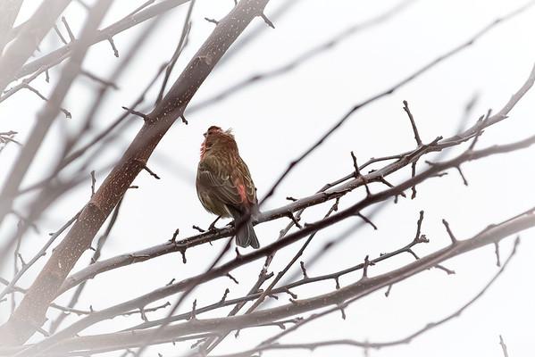 Birds - Spring '15