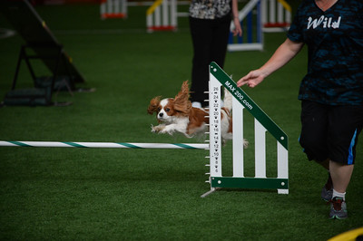 JAG AKC Agility Trial August 5-7