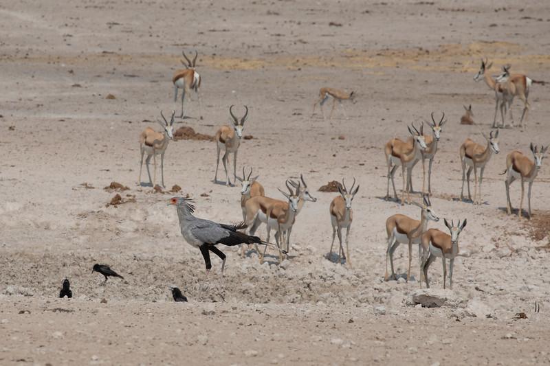 Namibia 69A8435.jpg