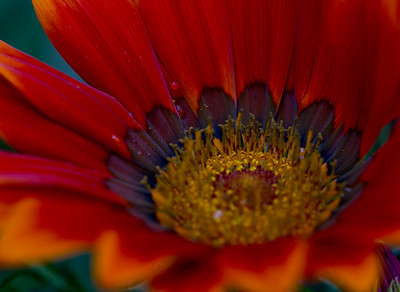Flowers 2016 (Winnipeg Photographers)