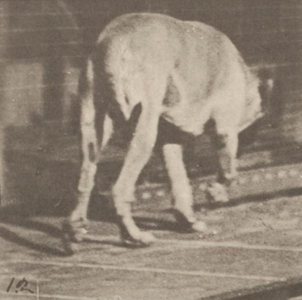 Dog Dread walking