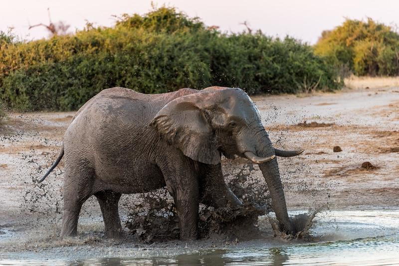 Botswana_June_2017 (4243 of 6179).jpg