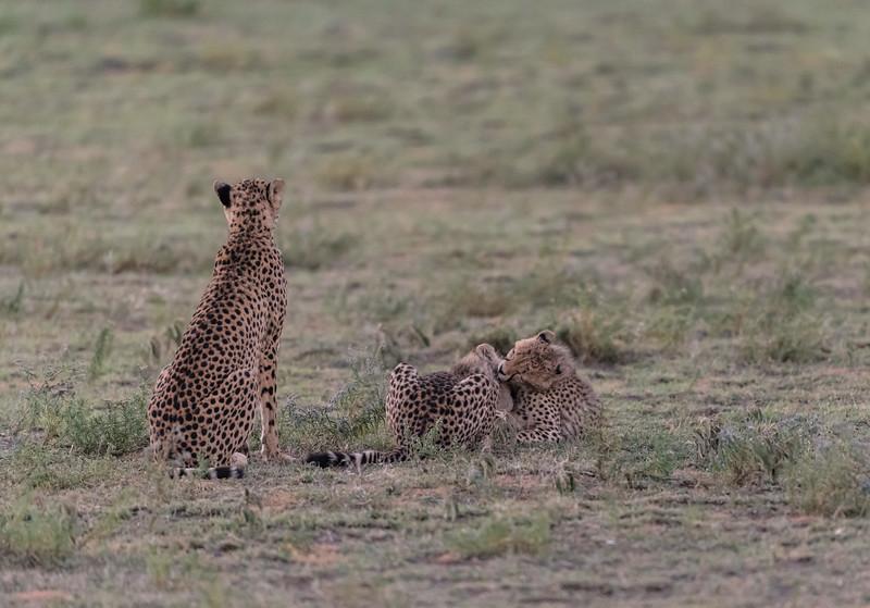 Tanzania_Feb_2018-116.jpg