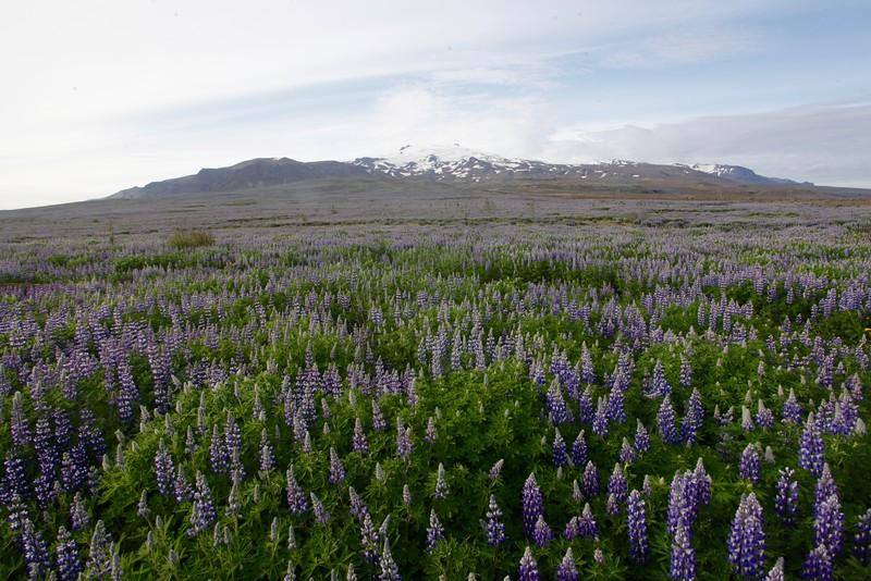 Iceland - 5.jpg