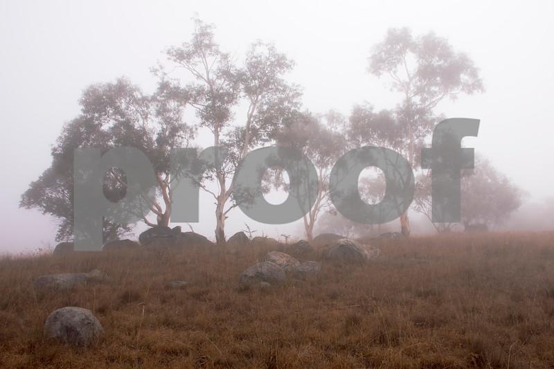 foggy trees 2.jpg