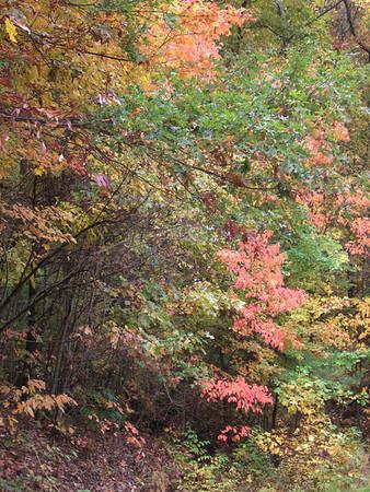 10-24 - FS 42, Suches, GA - Fall Foliage