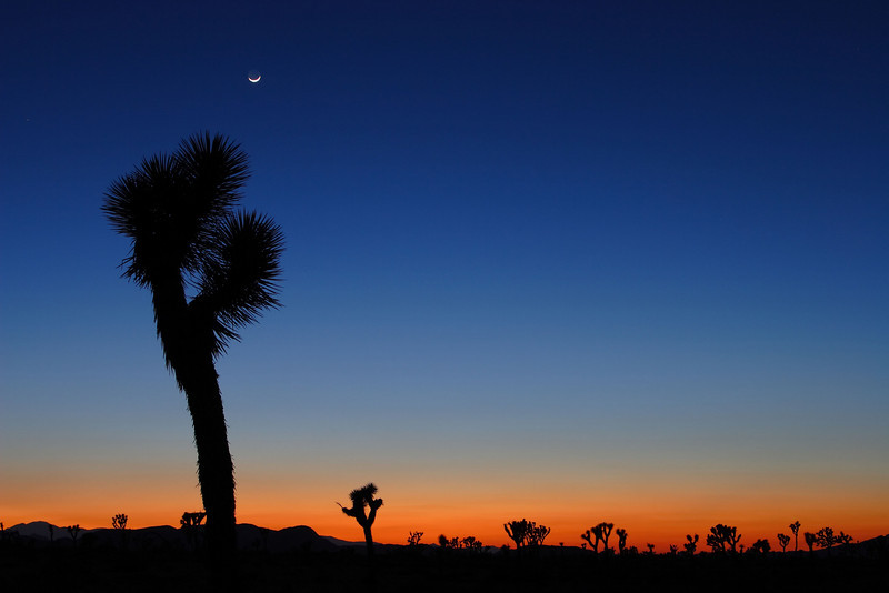 Crescent Moon at Dusk Joshua Tree National Park California