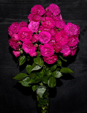 Santa Clarita Rose Society Rose Show 110709