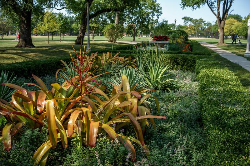 Portage Park Plants