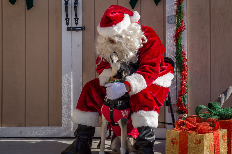 Pet Pictures With Santa-101.jpg