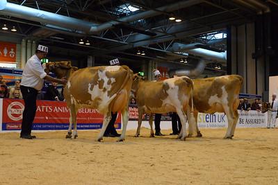 UK Livestock Guernsey 2015