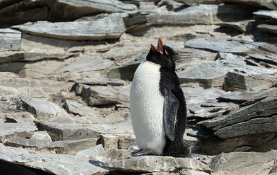 Falkland Islands 2018