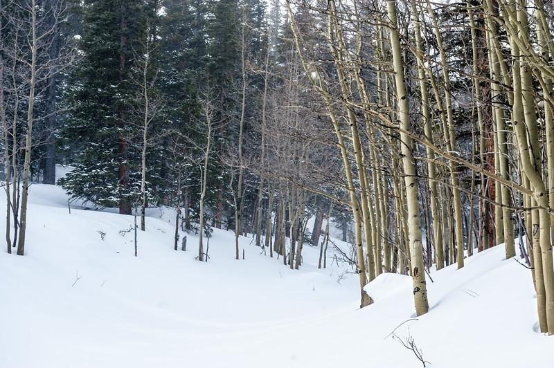 Boulder - January '16