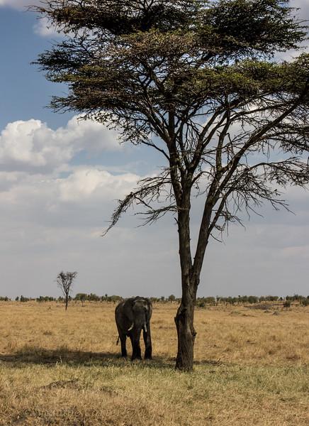 Elephant  tree 9876.jpg