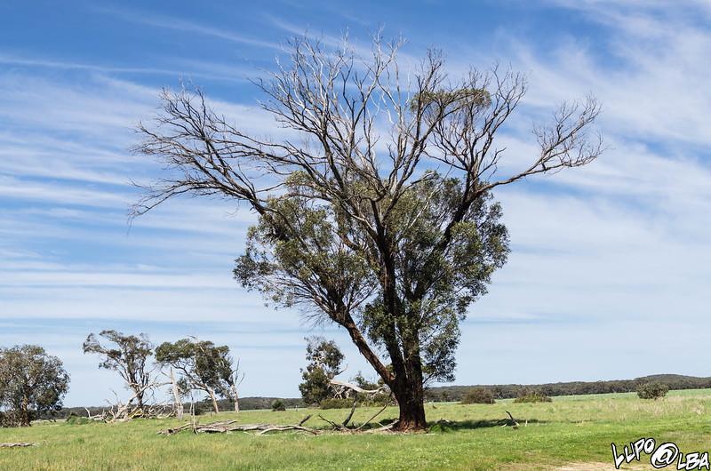 Australia-355.jpg