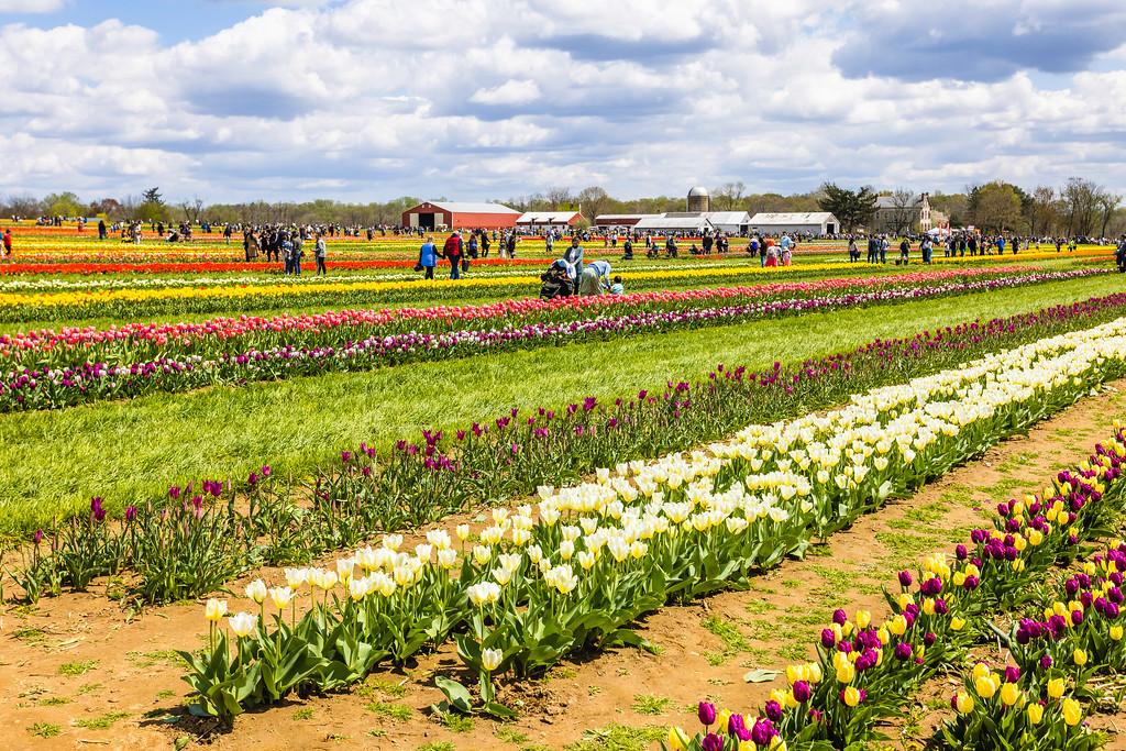荷兰岭农场(Holland Ridge Farms, NJ),五彩花带