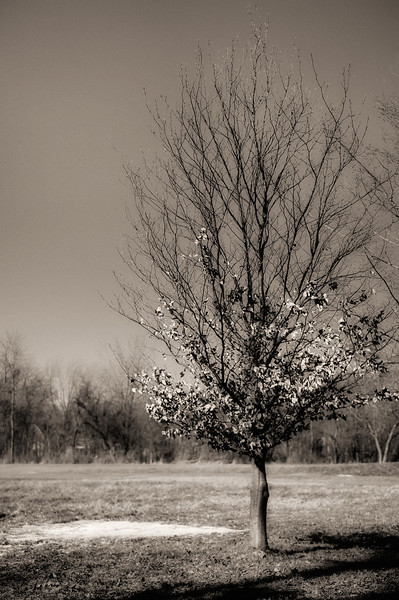 treeglow.jpg