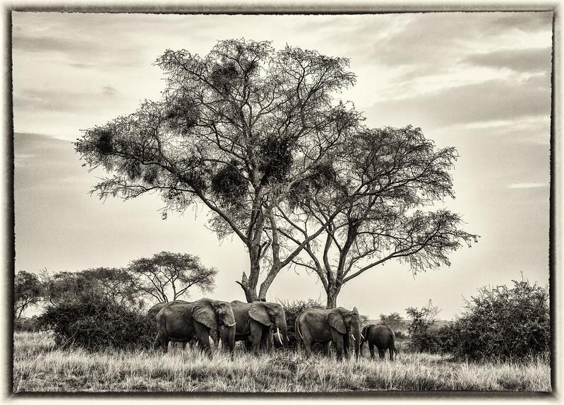 African_Apes_0218_PSokol-3080-Edit-Edit-3.jpg