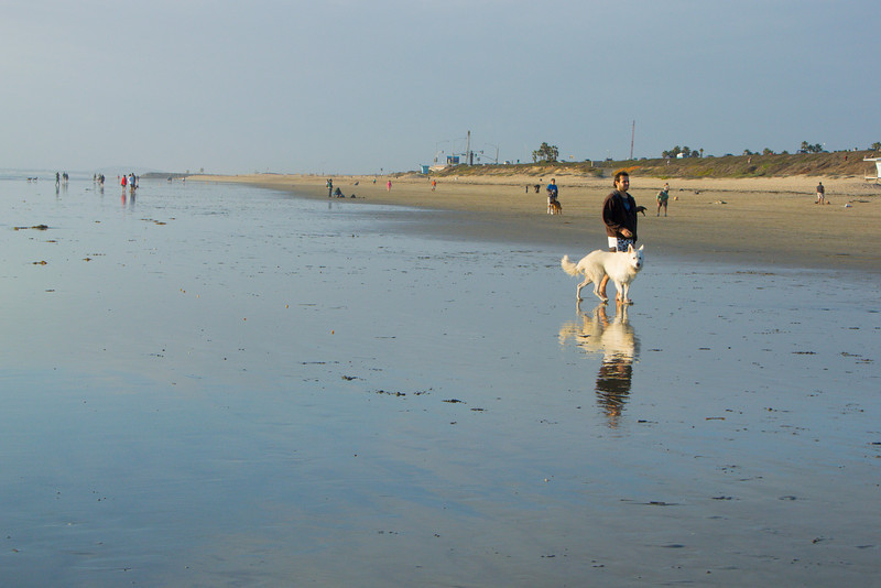 dogs_beach-66.jpg