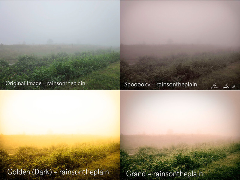 foggy field.jpg
