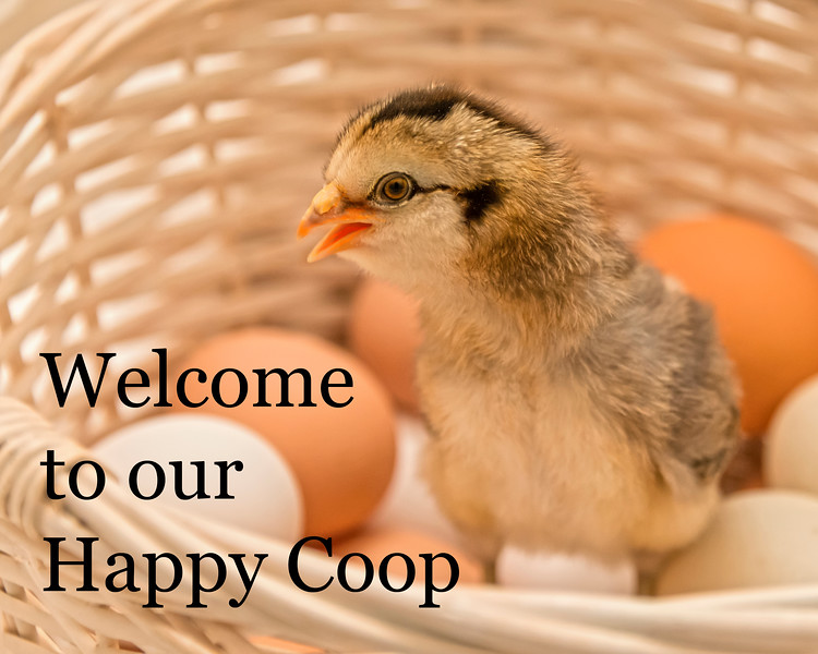 WelcomeToOurHappyCoop-001.jpg