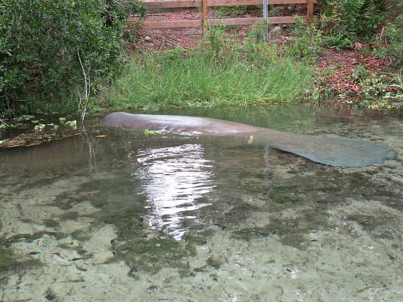 Weeki Wachee canoe-kayak 18.jpg