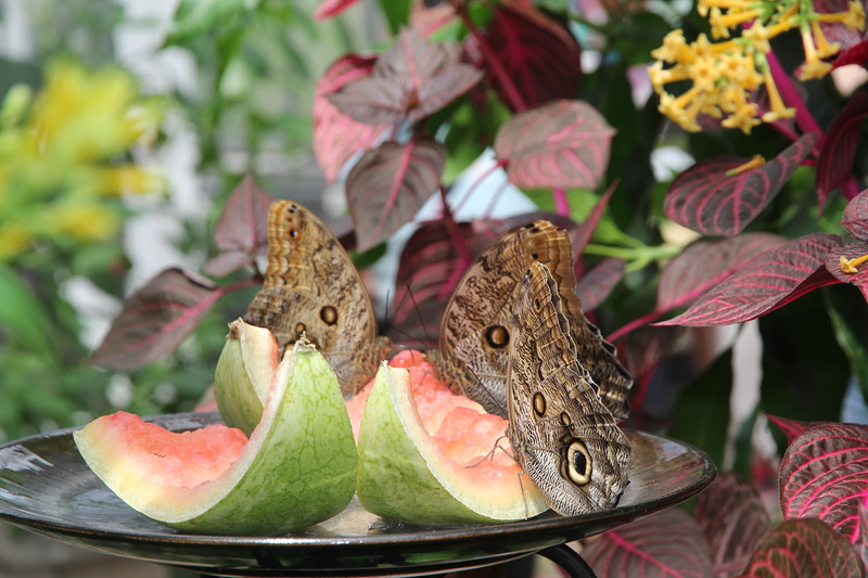 in the butterfly garden portion of the conservatory