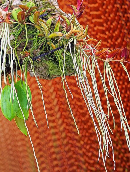T_Orchid_Strings.jpg