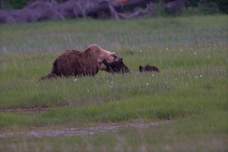 Alaska-6539.jpg