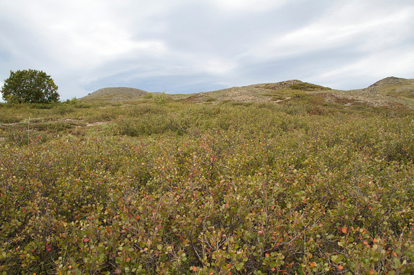 Primrose Ridge Hike (Aug 2010)