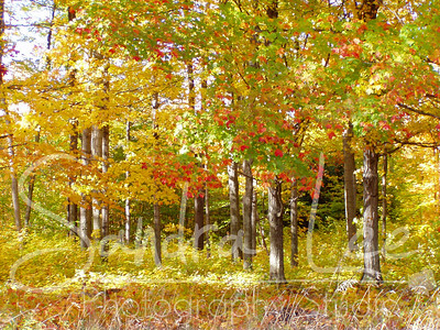 Autumn in Northern Michigan by Petoskey Photographer, Sandra Lee