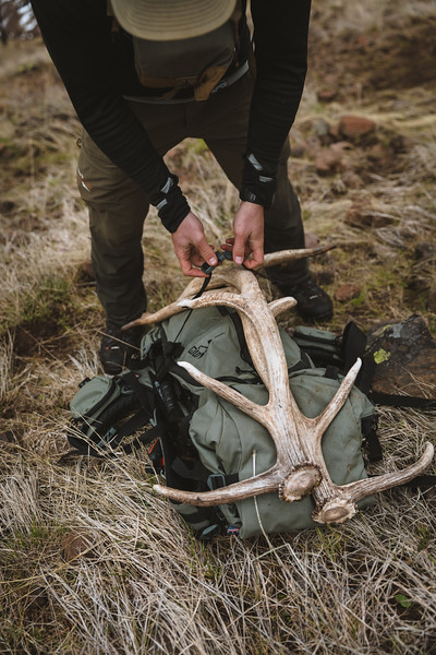 Casey Barton (_caseybarton_) strapping in a white set of elk antlers while shed hunting in Oregon.