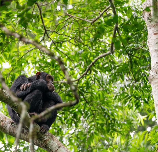 Uganda_T_Chimps-1174.jpg