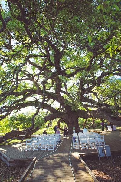 Kathy and Shannon's, Treaty Oak Wedding