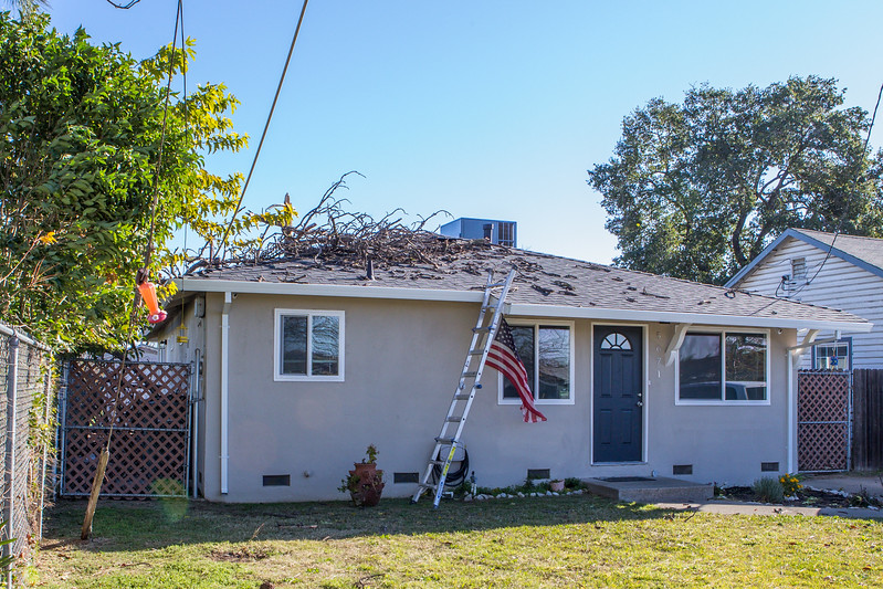 5671 Wallace Ave - Tree 1030am 12 16 2017 Extremly Windy Conditions-1.jpg