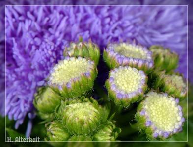Flowers - Pink & Purple