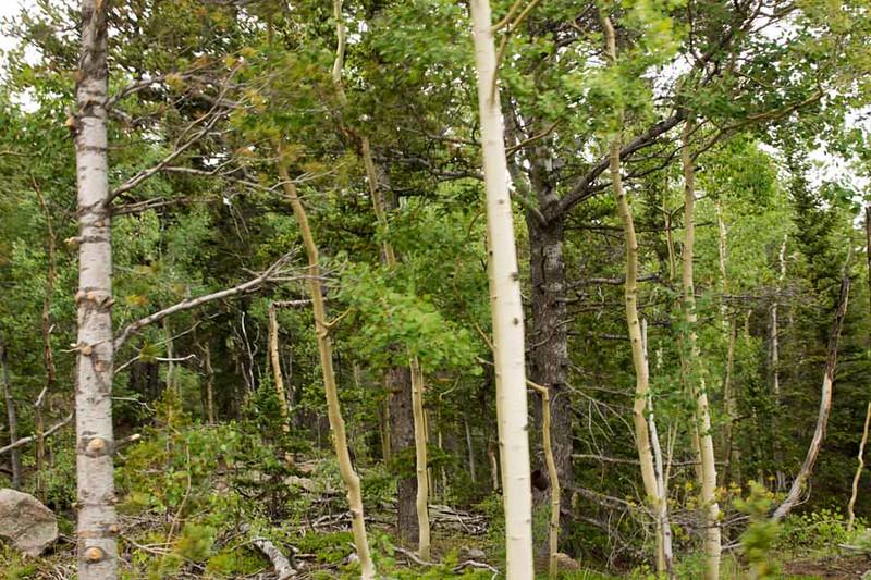 Colorado Springs-111.jpg