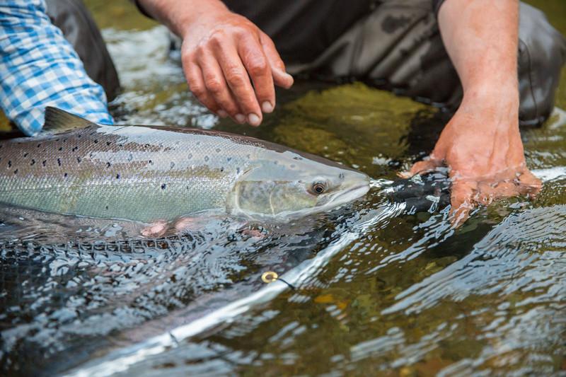 gaspeatlanticsalmonflyfishing2018.bencarmichael (125 of 234).jpg