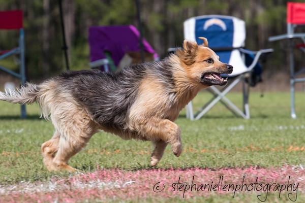 _MG_3246Up_dog_International_2016_StephaniellenPhotography.jpg