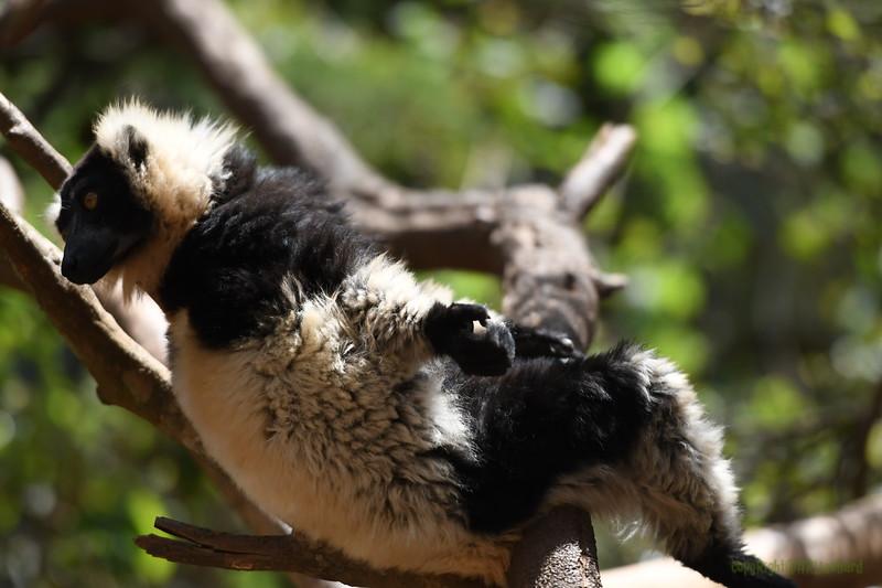 Madagascar 2017 (31)