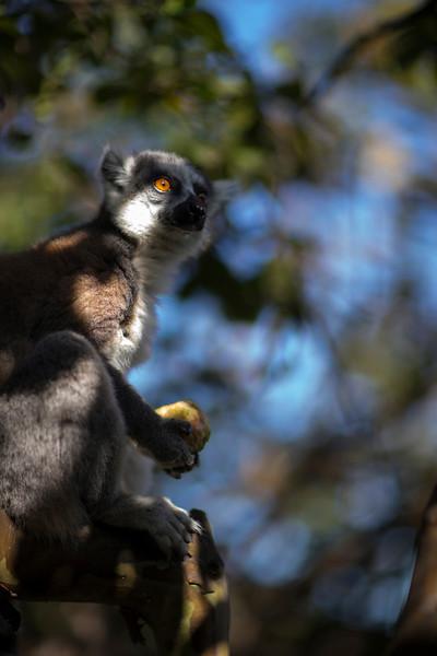 Madagascar_2013_FH0T1567.jpg