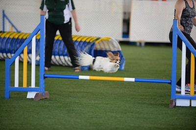 Saturday Masters Jumpers