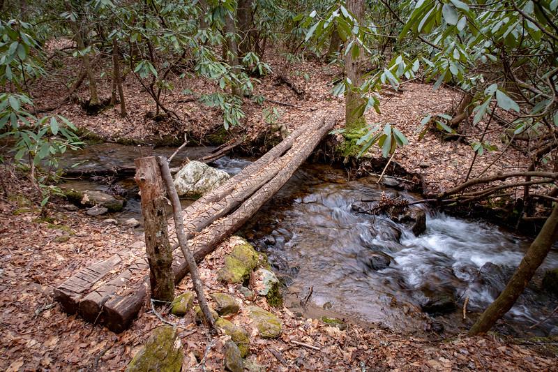 Bad Fork Trail, Henderson County (3-3-19)