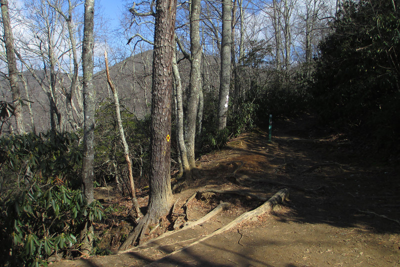 Old Trestle Road-Lookout Trail Junction