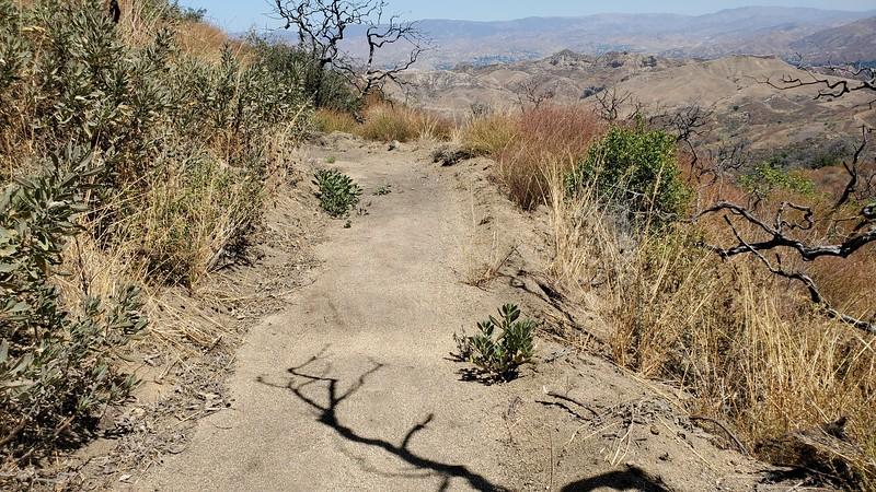 20190810027-Los Pinetos trailwork.jpg
