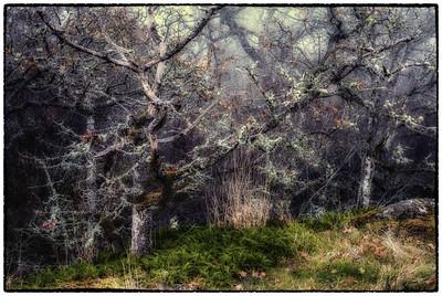 Garry Oak Forests