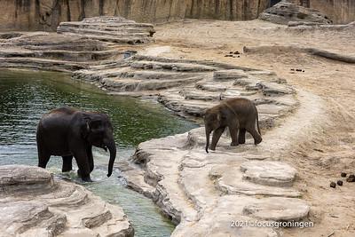 Dieren Olifanten